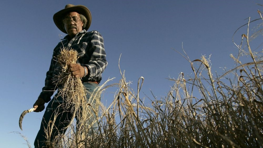 Some 6.5 million farmers produce 44 million quintals (9.7 billion pounds) of teff every year.