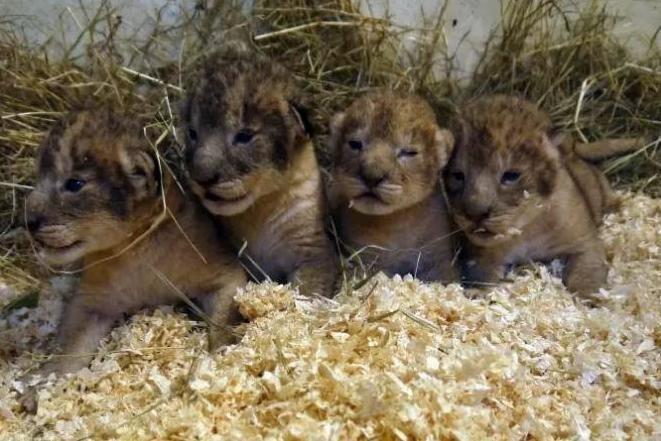 Source: Boras Djurpark Zoo
