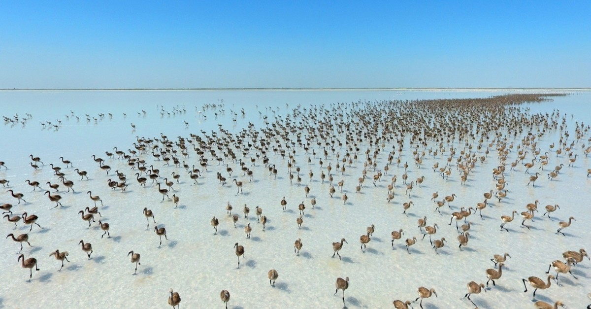 Lake Tuz is one of the most visited breeding grounds for flamingos.