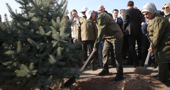 President Recep Tayyip Erdoğan plants the first sapling to kick-start the Breath for the Future mass tree plantation event, Ankara, Turkey, Nov. 11, 2019. (AA Photo)