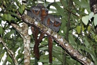 Researchers have found 381 new species in the Amazon rainforest, the World Wildlife Fund announced Wednesday, warning that the discoveries were all in areas threatened by human activity.  The...