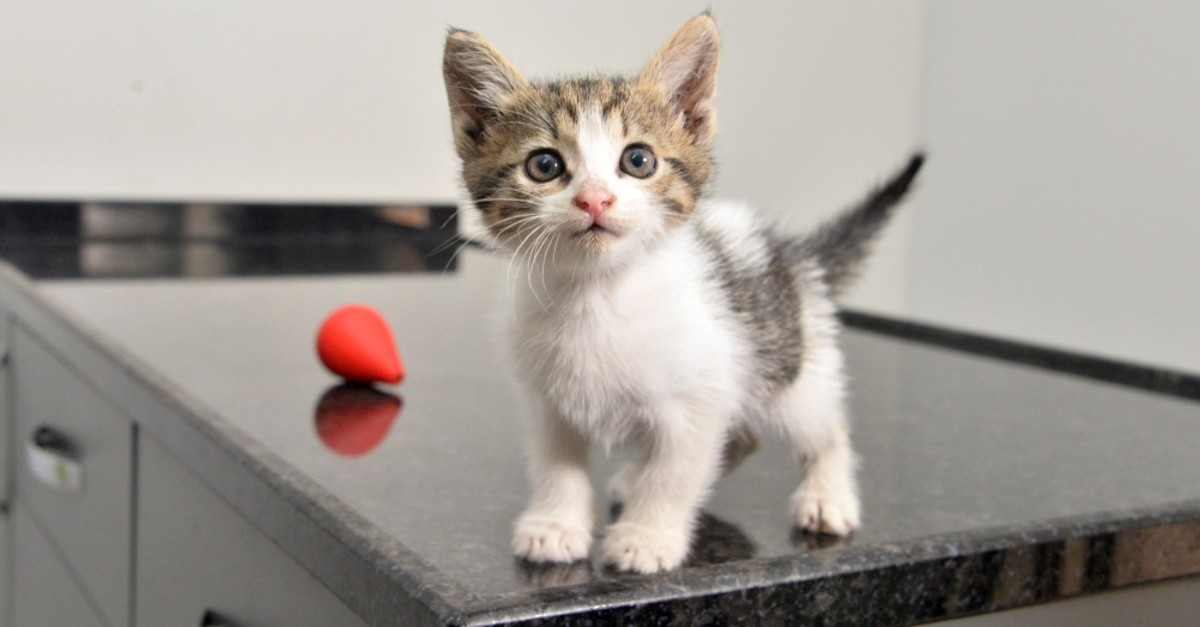 The kitten was named Istanbul by its rescuers.