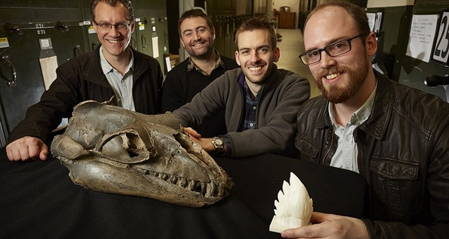 This undated handout photograph from Museums Victoria in Melbourne released on August 29, 2017 shows (L-R) Alistair Evans, Erich Fitzgerald, Felix Marx and David Hocking with a Janjucetus skull and 3D tooth model. (AFP Photo)