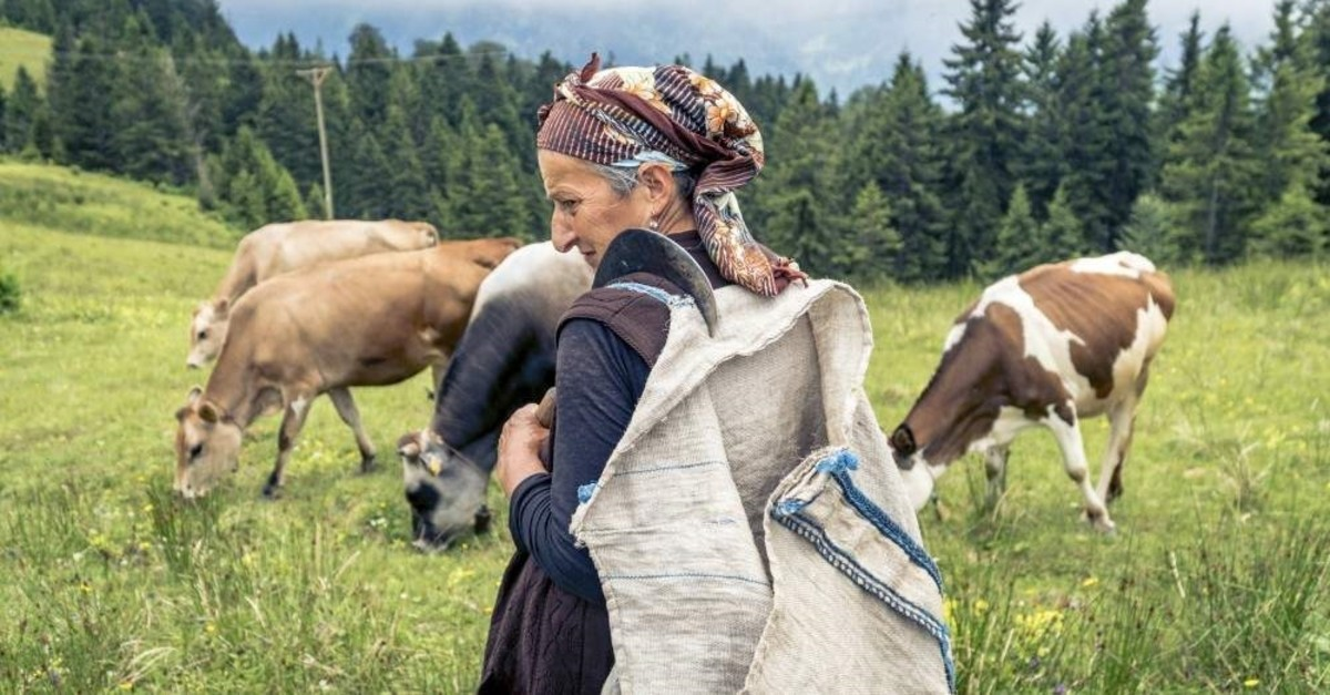 An elderly shepherdess in the Black Sea province of Rize. (iStock Photo)