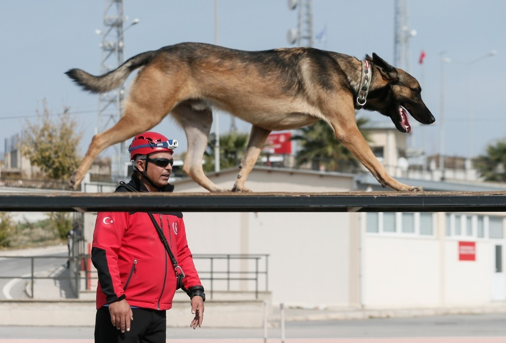 Search & rescue dogs are trained for two years to be fully equipped for a mission. Although they are cute, they don't hesitate risking their lives to save others. The photo taken at the training center in u0130zmir shows one of the dogs with his trainer.