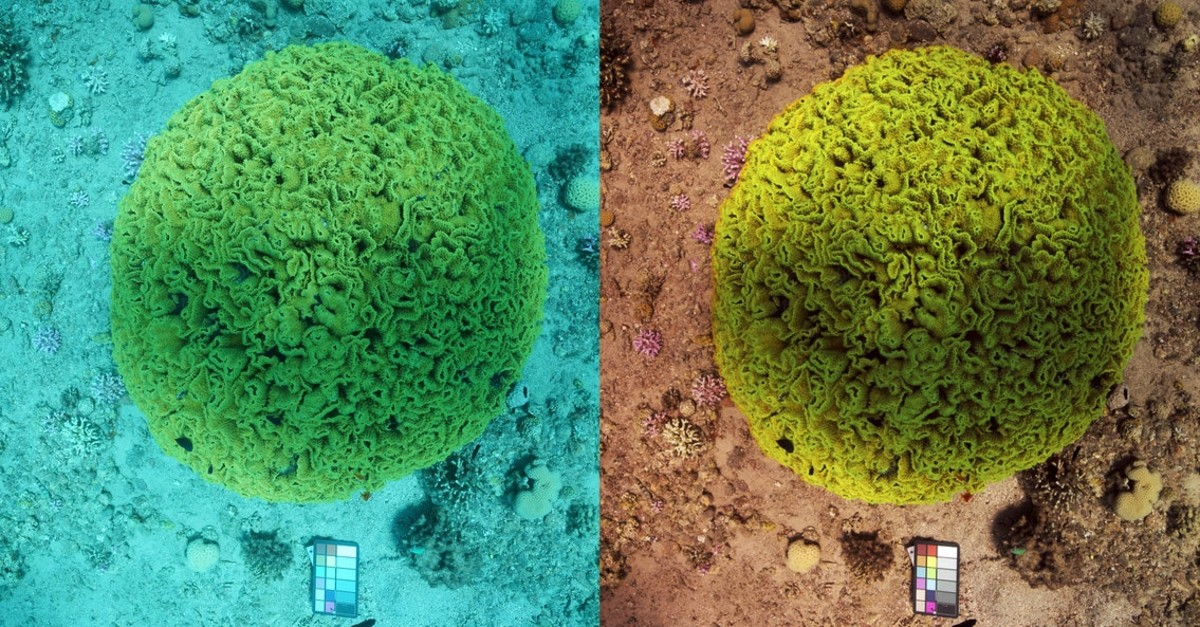 This undated image shows an underwater photo before, left, and after See-thru is applied. (Photo courtesy of Derya Akkaynak)