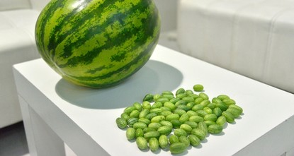 Turkish firm produces bite-sized watermelons