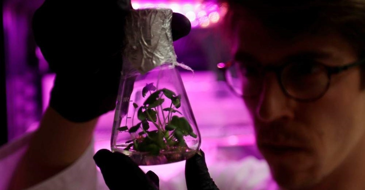 Scientist Jan Lukacevic looks at a flask with germinated plants as a part of the Marsonaut experiment in Prague, Czech Republic, Oct. 30, 2019. REUTERS