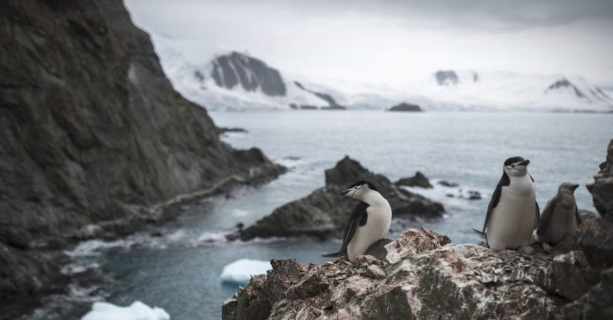 A handout photo made available by Greenpeace shows a group of chinstrap penguins on Elephant Island, Antarctica on Feb. 11, 2020. (EPA)