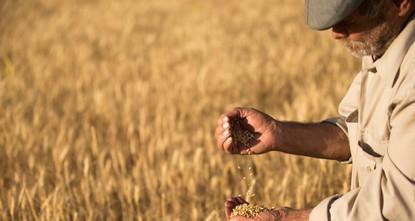 Украина экспортировала 14 миллионов тонн зерна