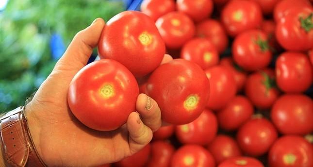 مزارعون أتراك يتحدون الحظر الروسي بزرع الملفوف بدل الطماطم