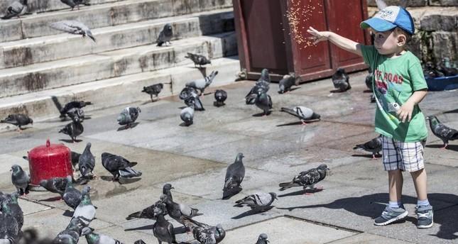 Cities shorten birds' lives, study shows