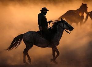Табун лошадей у подножия вулканической горы Эрджиес