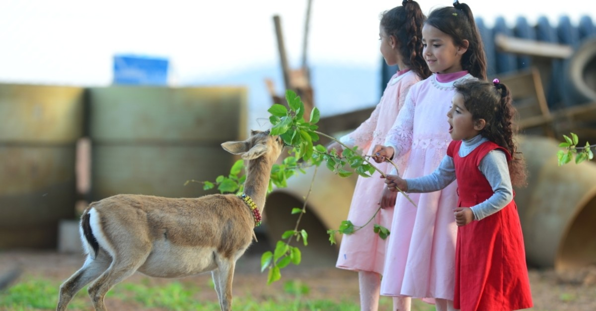 The daughters of Fevzi Felhan feed one of the gazelles living in their garden.