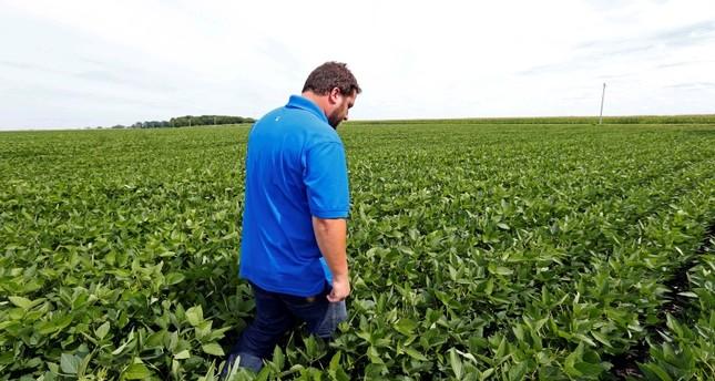 Soybean farmer Michael Petefish walks through his soybeans at his farm near Claremont in southern Minnesota. (AP Photo)