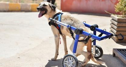 Strays in good hands at Mardin rehabilitation center