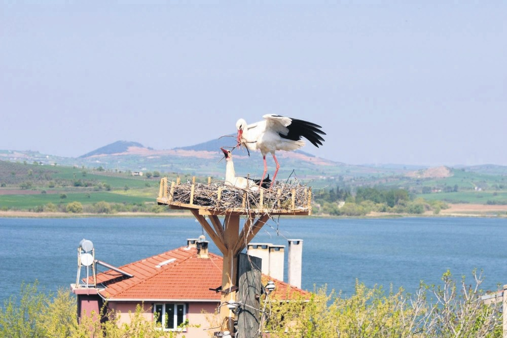 Artificial nests for storks were put on the electric poles and roofs in Eskikaraau011fau00e7.
