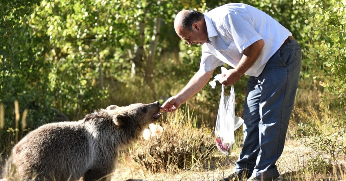 Asu0131m Arabou011fa, an animal lover, feeds a bear cub in the eastern Turkish province of Bitlis, Oct. 4, 2019.