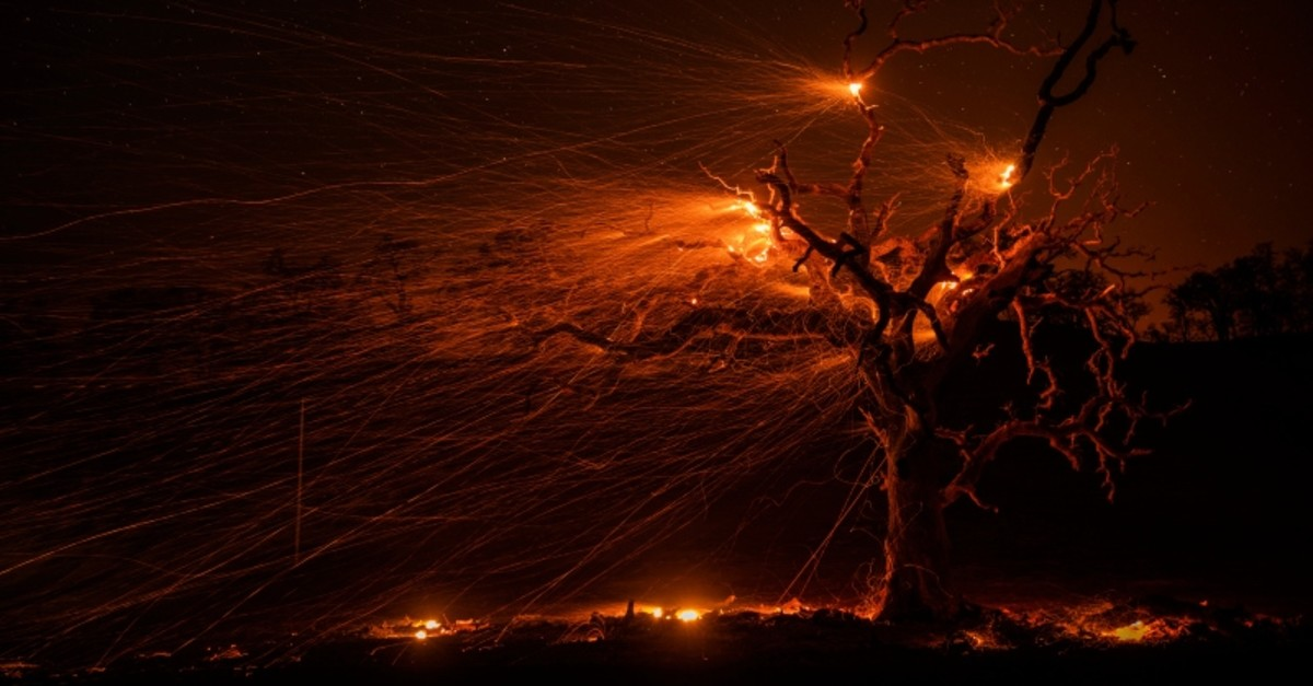 High winds fuel hot embers from a burning oak tree near Windsor, California, October 29, 2019.  (EPA Photo)