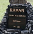 Last northern white rhino honored in Kenya