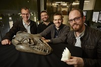 Ancient whales had sharp predator teeth like lions, scientists say