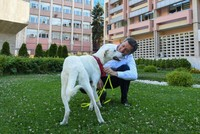 Schools to be allowed to adopt stray animals, minister says