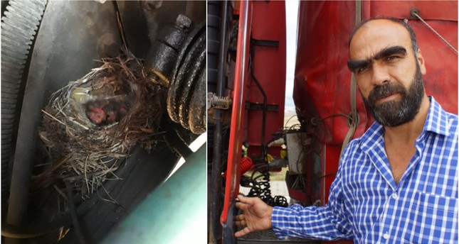 Turkish trucker waits 45 days for baby birds nestled in engine to hatch and fly before driving again