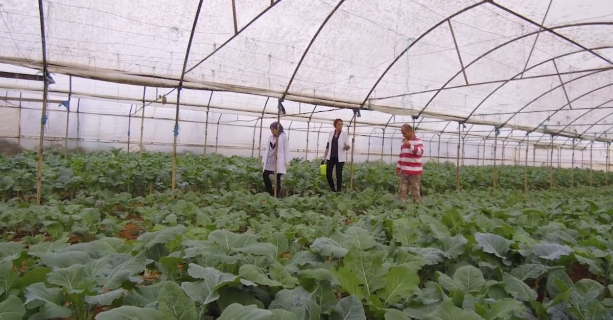The green house of Nanamic is a good testing area for their products.