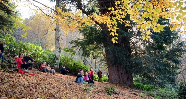 Visitors enjoy spending time under the world's fifth-oldest tree in Zonguldak. (DHA Photo)