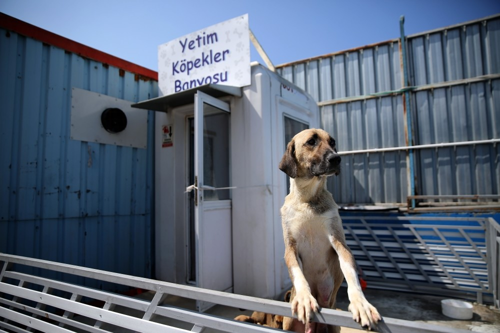 The sign reads ,Bath for orphaned dogs,