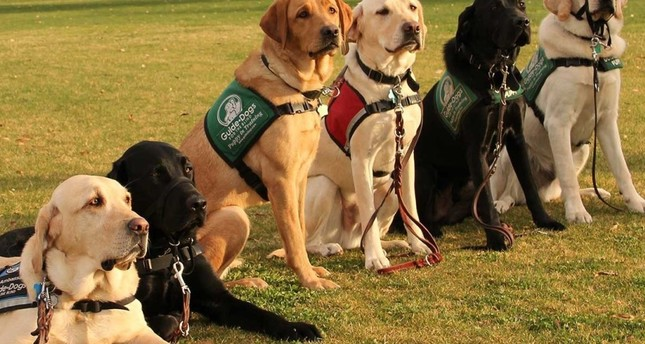 Visually impaired live fuller lives with guide dogs