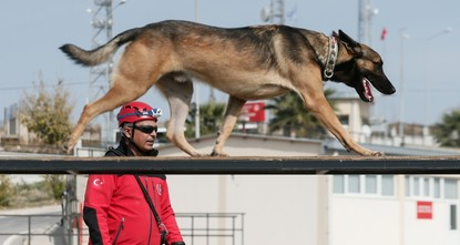 Search and rescue dogs sniff to save lives