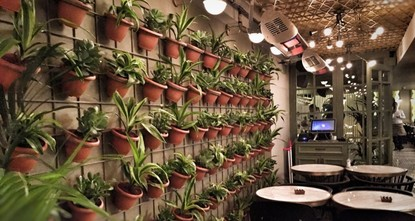 pPlants are the jewels of a home. They can bring a breath of fresh air to any room and create a positive aura. There are numerous house plants that you can choose from; however, growing them...