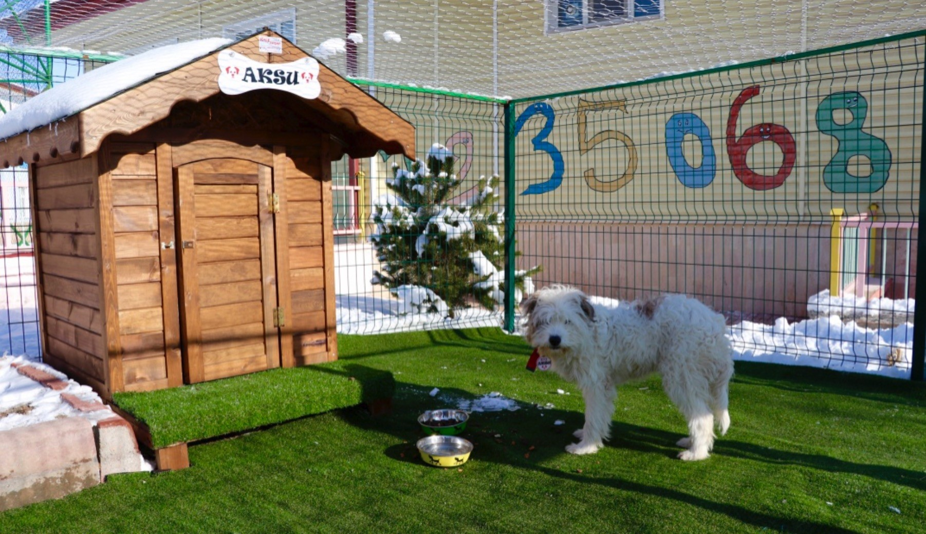 Dogs are fed in their new shelters built in schools.