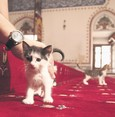 Cat gives birth in mosque, congregation takes care of kittens