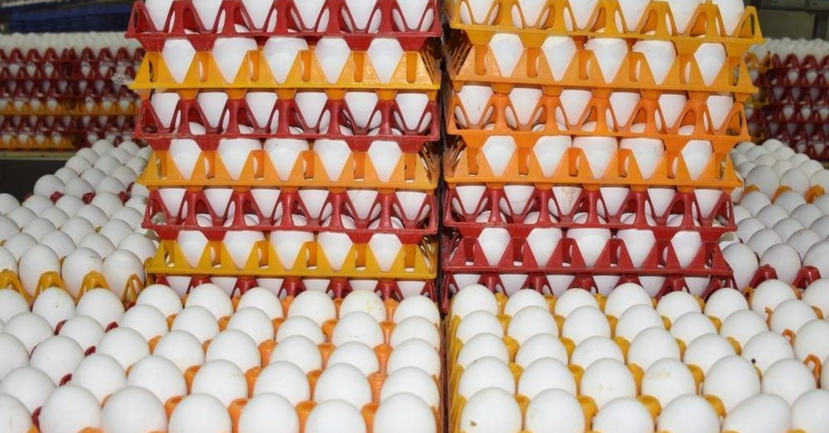 Turkish egg exporters have been trying to compensate for the loss of the Iraqi market with new countries in the Gulf, including United Arab Emirates, Kuwait and Oman. (AA Photo)