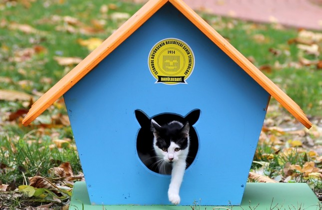 So far, the carpenters have only produced cat houses but they will also make dog houses and bird nests in the future.