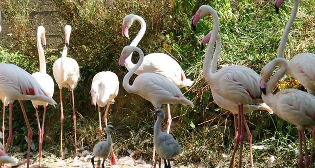 Место для семейного отдыха – зоопарк Дарыджа