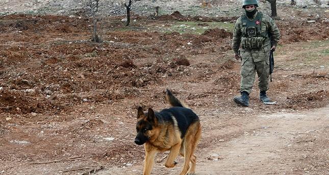 جندي تركي يستعين بكلب مدرب لاستكشاف الألغام المزروعة في برصايا بعفرين