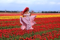 Tulip field social media hit, draws visitors before harvest