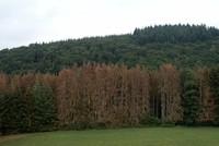 Europa: Über 40% der Baumarten bedroht