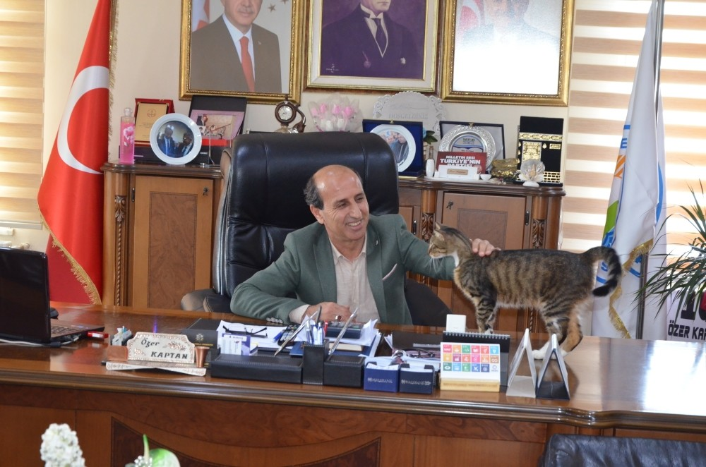 Mayor u00d6zer Kaptan cuddles pets a cat on his desk.
