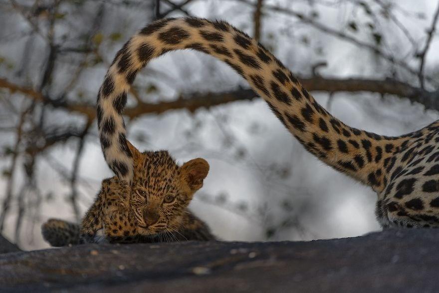 Kitten - Remarkable Award, Animals In Their Environment