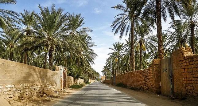 دعوة عراقية إقليمية لحماية أشجار النخيل من آفة فتاكة