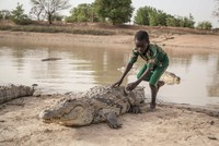 Sacred snappers: The village where crocodiles are welcome