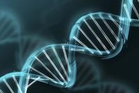 Forscher: Lebensmittel beeinflussen menschliche DNA