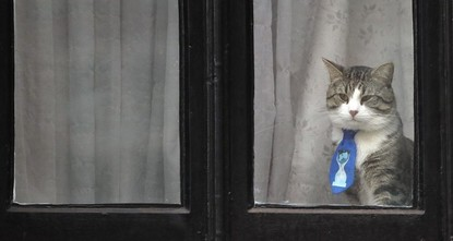 Ecuador asks Assange to avoid political speech, look after cat