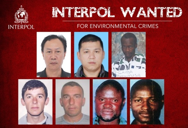 Interpol issues rare red notice for fugitives of 'environmental crimes'
