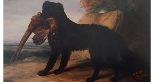 William Barraud, Black Retriever with a Pheasant, 1839.