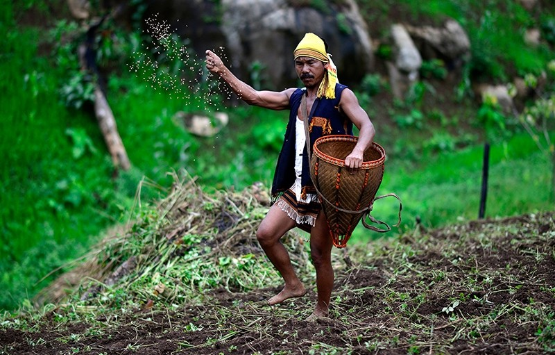 A Tiwa tribesman sows paddy in a Jhum field during the Panthai Langa ritual in Karbi Anglong district of Assam state, India, July 12, 2017. (EPA Photo)